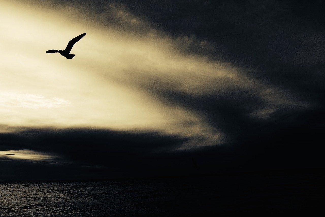 seagull-768785_1280.jpg