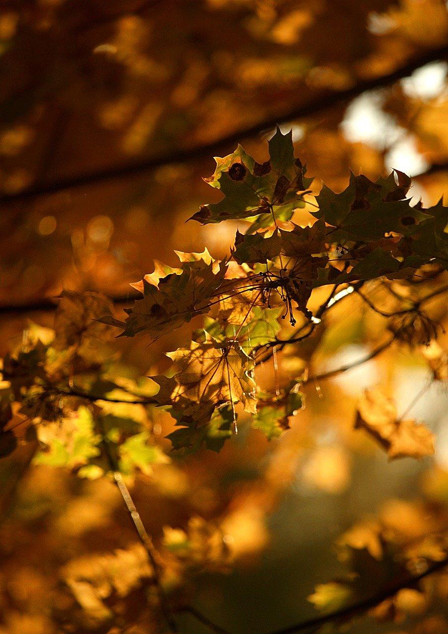 autumn-5624139_1280.jpg