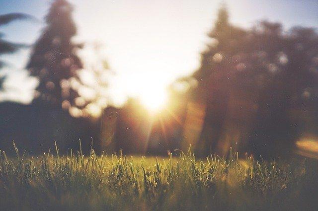 grass-455753_640.jpg