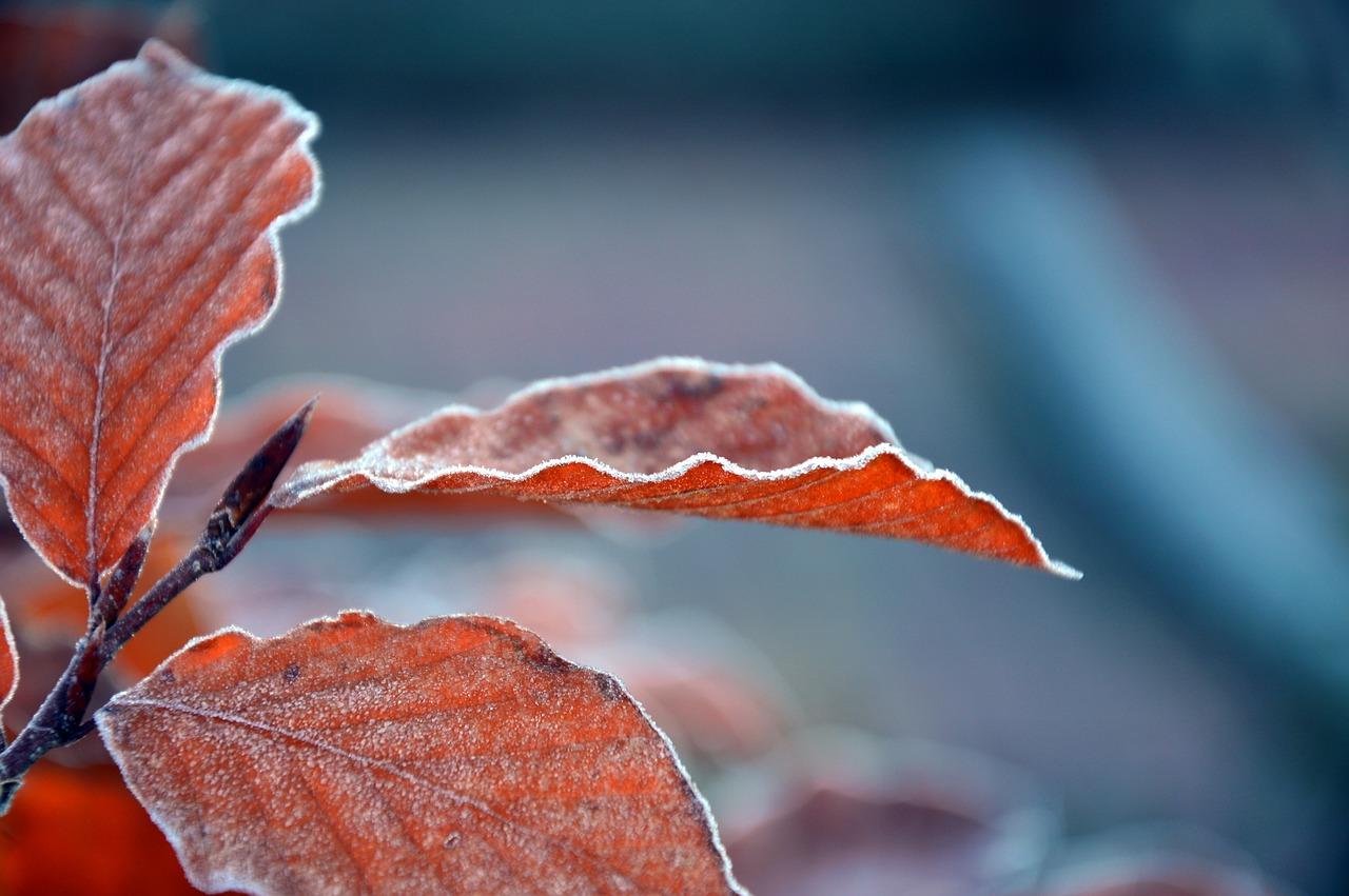 leaves-3845310_1280.jpg