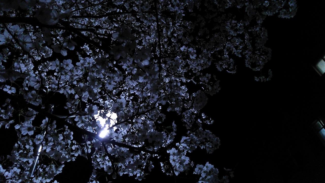 flower-2525888_1280.jpg