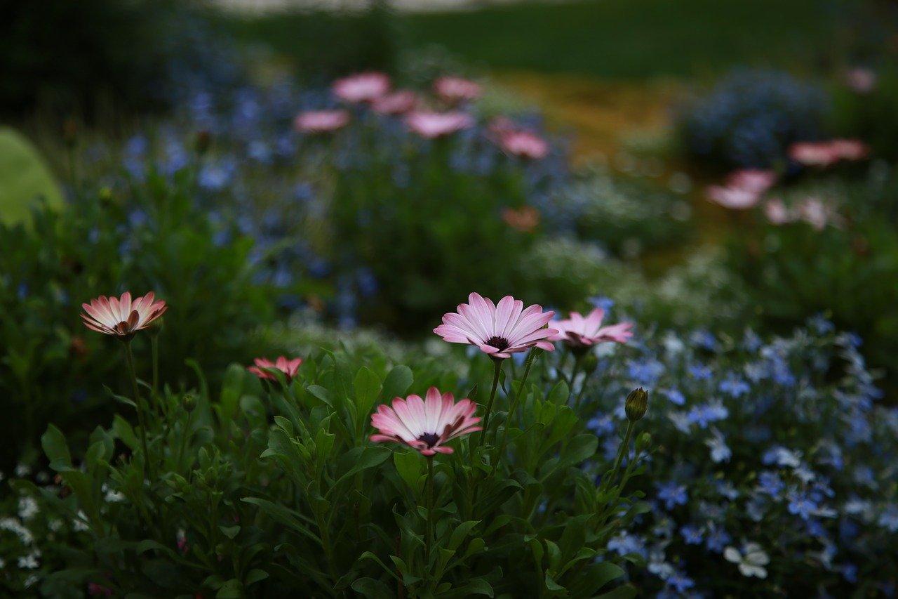 chrysanthemum-4143241_1280.jpg