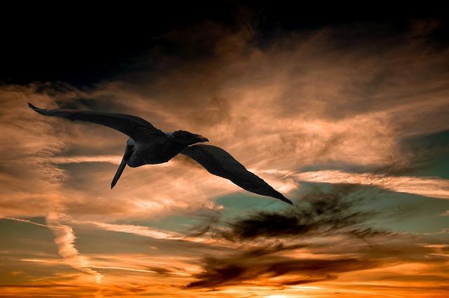 pelican-901004_640.jpg