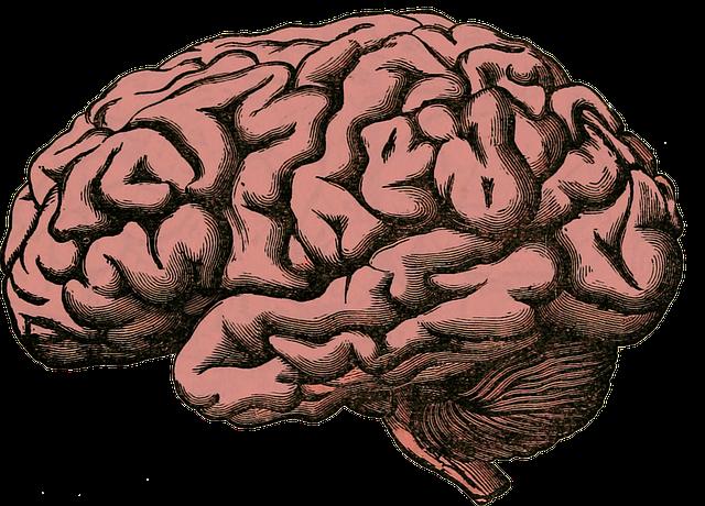 brain-512758_640.png
