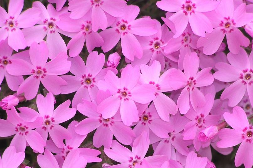 핑크.JPG