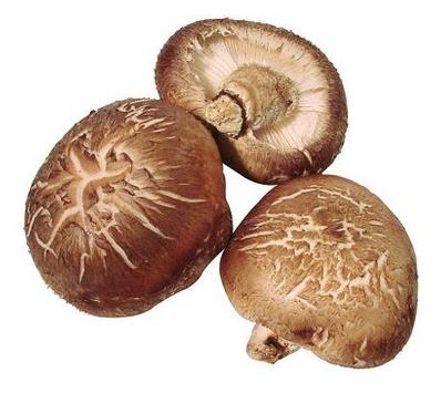 버섯.PNG