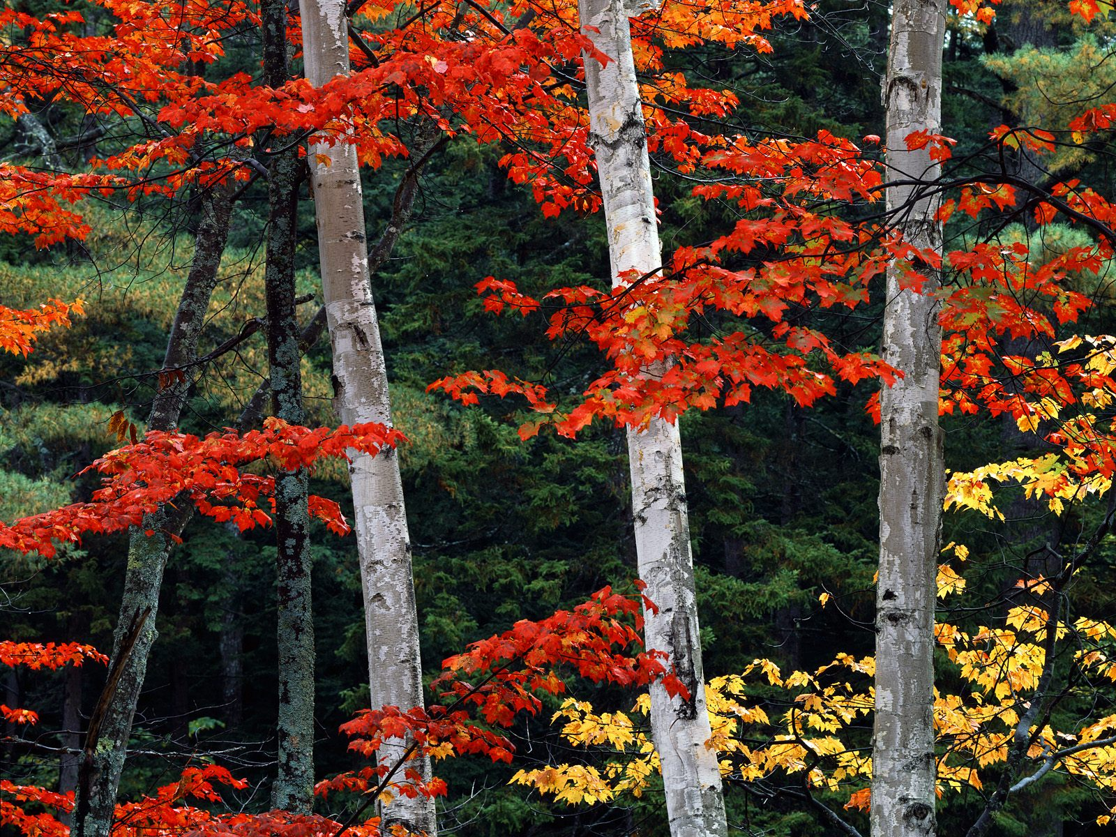Fall_Color_White_Mountain_National_Forest_New_Hampshire.jpg